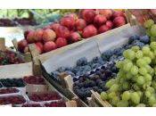 Comidas dietéticas para vegetarianos