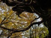 Bajo gran árbol