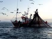 Artes Pesca (V): Cerco