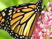 Reflexiones acerca vida mariposa