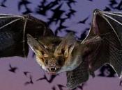¿Qué sabemos murciélagos?