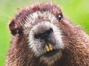 """Ubuntu 18.04 llamará """"Bionic Beaver"""""""
