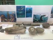 internacional fósil celebrado instituto antártico argentino