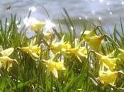 'Daffodils' ('Narcisos'), William Wordsworth