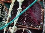 Artes Pesca (VI): Nasas