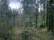 "grove trees from point view"", nuevo trabajo profesor TAI, Juan Millás llega Museo Nacional Romanticismo"