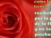 Rosas rojas para hacer postales románticas gratis.