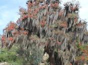Postales tierra: árbol vida