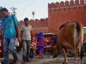 India: primeras impresiones viajero impresionado