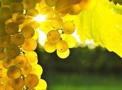 Mejor vino blanco español 2016. Maridaje sabores Umami.