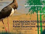 Jornadas sobre Aves Comarca Almadén