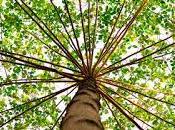 ¿Por deberías plantar árbol?