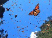 mariposas Insectos Peligro