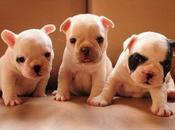 Fotos perritos tiernos bonitos peludos para pantalla