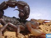 escorpiones peligrosos mundo.
