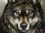 lobo limes