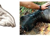 Nueva especie orangután