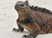 ECUADOR Galápagos tres muertes resolver primeros colonos Floreana.