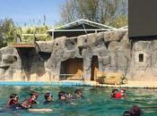 Idea regalo: baño osos marinos