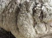 MALTRATO: Producción lana