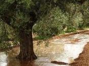 precio medio tierra agrícola crece Andalucía