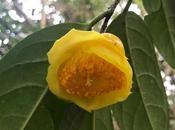 ¡Comienza temporada camelias! camellia season begins!