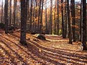 bosque mágico Castañar Tiemblo