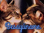 Imagenes amor gatitos para facebook