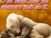 Hermosos Lobos Blancos Frases Románticas