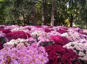 Flores formando mullido manto