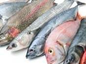 pescado, alimento gran aportación calcio