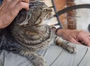 Liga para Protección Animales Plantas Barcelona, trabajando desde 1944
