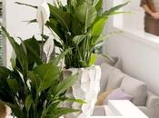 especies plantas bonitas, indestructibles purificantes