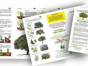 Guía básica: ¿Cómo plantar árbol?
