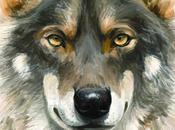 Comprender proteger lobo