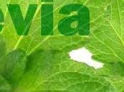 Información sobre stevia debes conocer