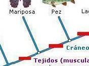¿Que cladograma?