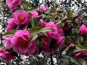 ¡Las flores jardín febrero! flowers garden February!