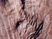 urolitos, huella fosilizada meada prehistórica