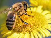 confirma gran riesgo para abejas