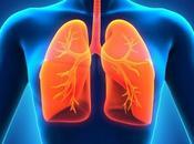 Alimentación para salud pulmonar respiratoria