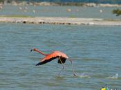 Turismo naturaleza: crece avistaje aves Argentina