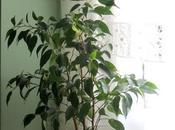 barro, tiestos, plantas ancestros....