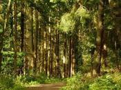 Sobre Bosques Internacional.