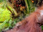 observación sobre aceite palma