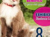 evento canino adopción Villaviciosa Abril).