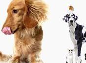 Aloe para perros sanos, gatos caballos