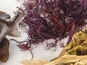 Algas marinas alimento alto valor nutricional
