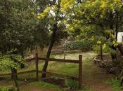 Reflexiones paseando jardín cuajado mimosas
