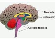 Función tienen Conexiones Retroalimentación Neocortex